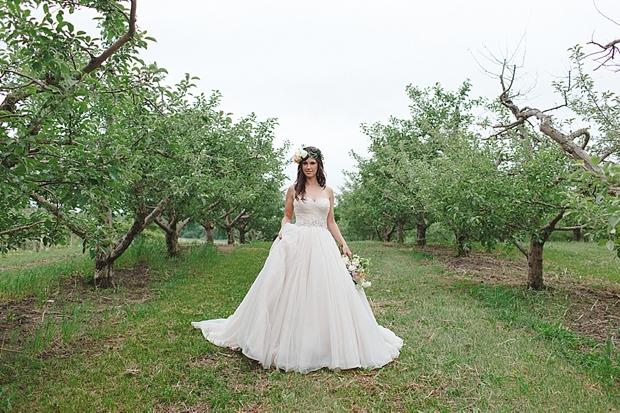 Minnetonka Apple Orchards